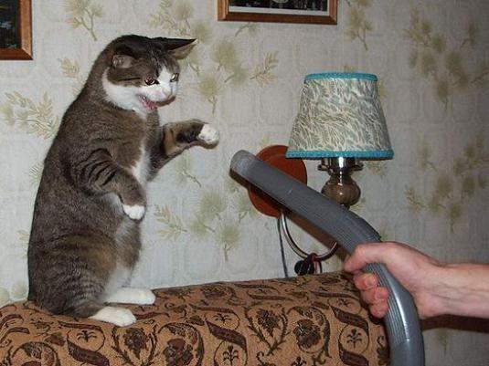 Чого бояться кішки?
