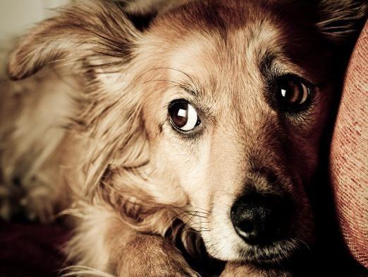 Чого бояться собаки?