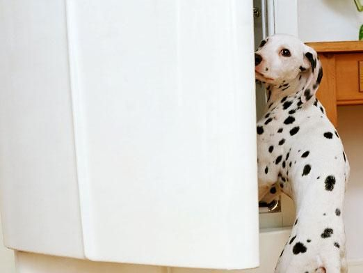 Чим годувати собаку?
