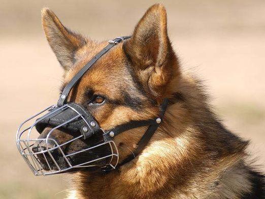 Чим небезпечні собаки?