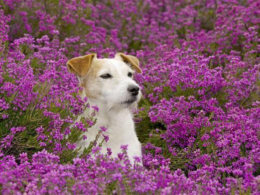 Чим рослини відрізняються від тварин?