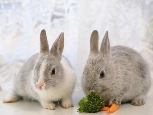 Що їдять кролики?