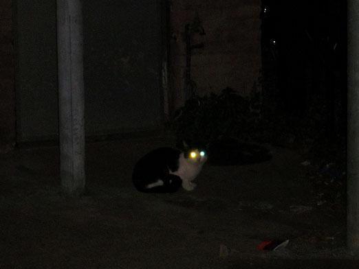 Що коти роблять вночі?