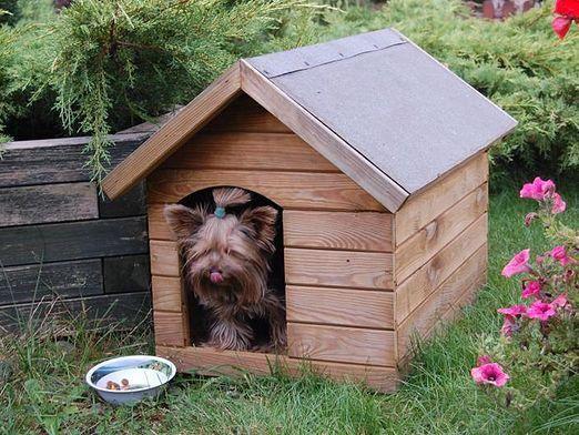Що потрібно для собаки?