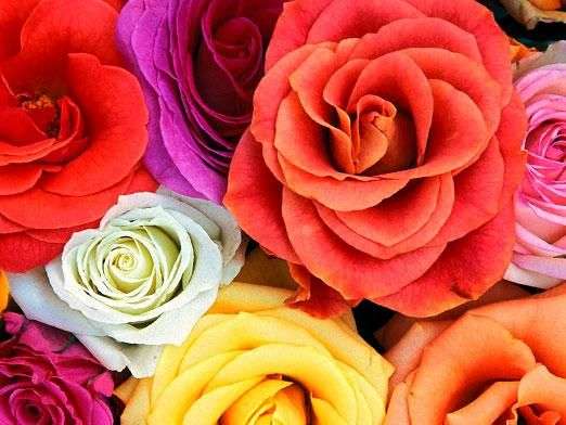 Що означає колір квітів?