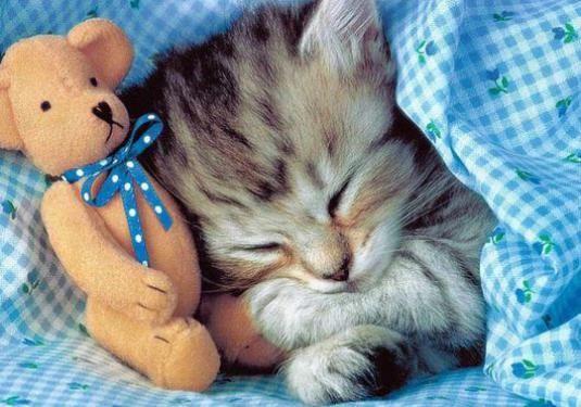 Що сниться кішкам?