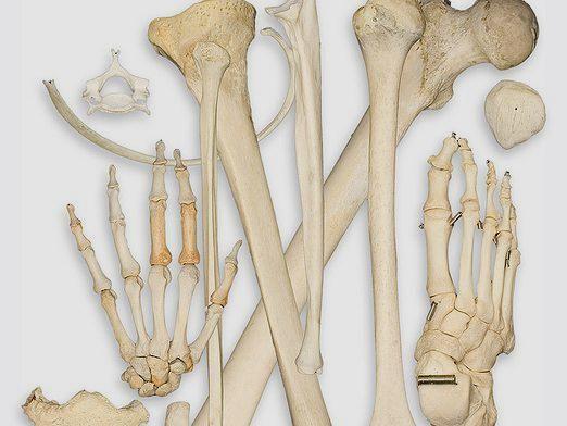 Що таке кістка?