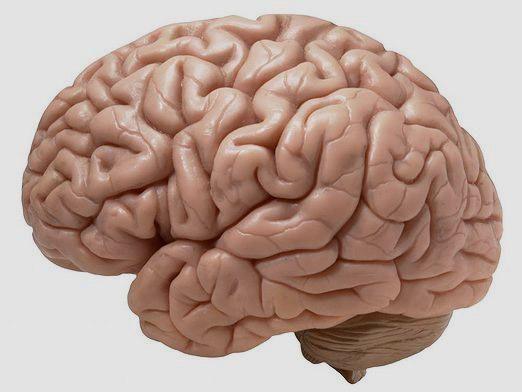 Що таке мозок?