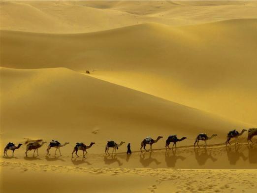 Що загрожує степах і пустелях?