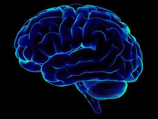 Для чого потрібен мозок?
