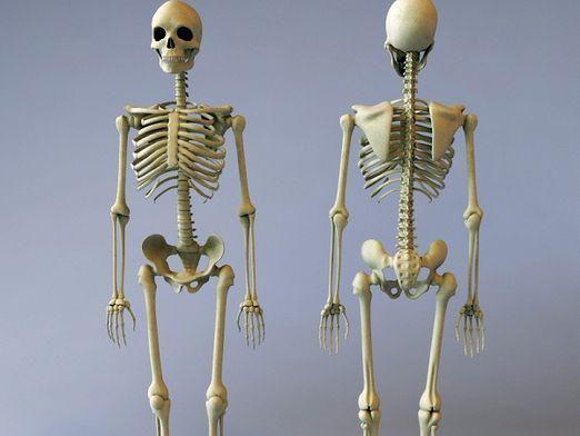 Для чого потрібні кістки?