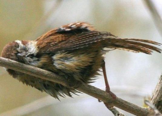 Де сплять птахи?