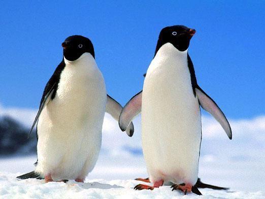 Де живуть пінгвіни?