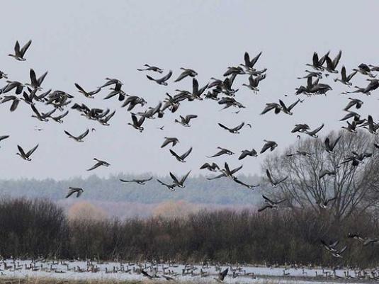 Де зимують птахи?