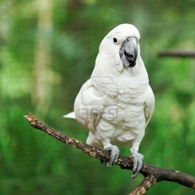 папуга говорить