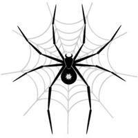 І все-таки скільки ніг у павука - шість або вісім