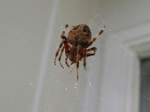 До чого павуки в домі?