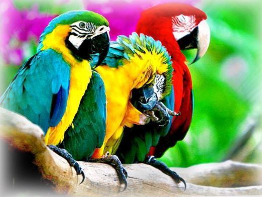 До чого сняться папуги?