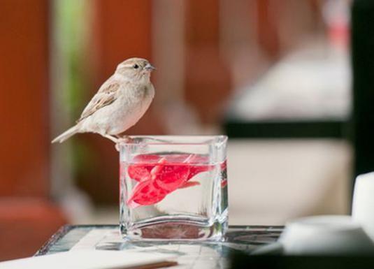 До чого залітає птах?