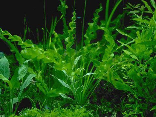Як дихають рослини?