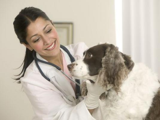 Як лікувати собаку?