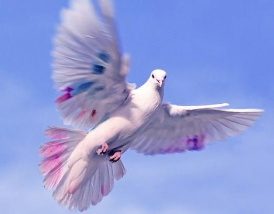 Як літає птах?