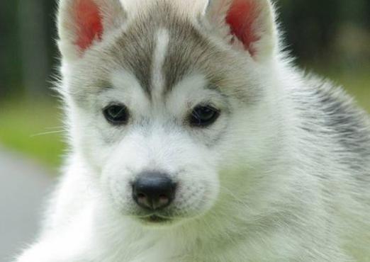 Як можна назвати собаку-дівчинку?