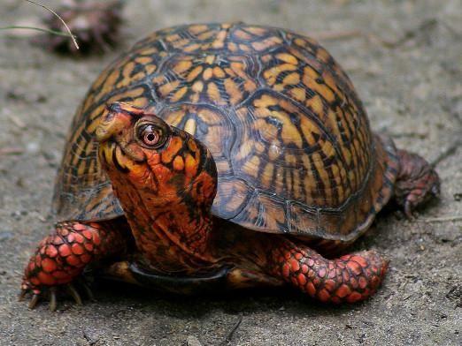 Як назвати черепаху?
