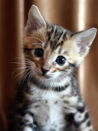 як назвати кошеня хлопчика