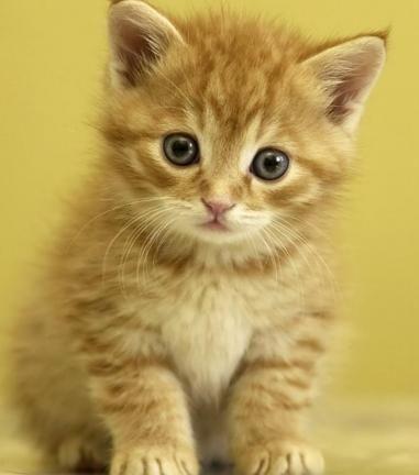 можна назвати кошеня хлопчика