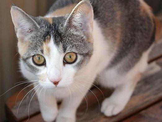 Як відрізнити кота від кішки?