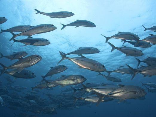 Як плавають риби?