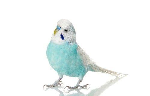 ім`я для папуги