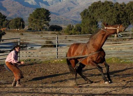 Як приручити коня?
