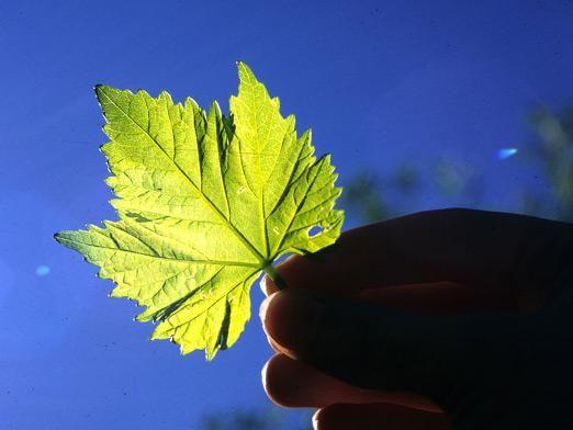 Як відбувається фотосинтез?
