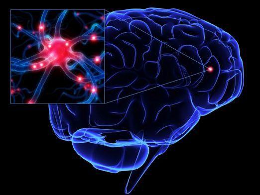 Як працює мозок?