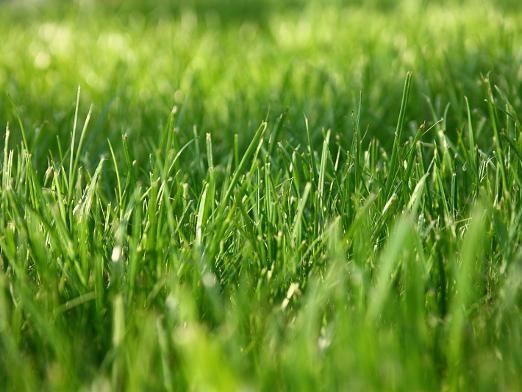 Як росте трава?