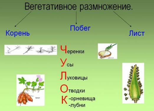 Як розмножуються квіти?