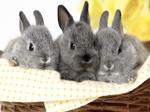 Як розводити кроликів?