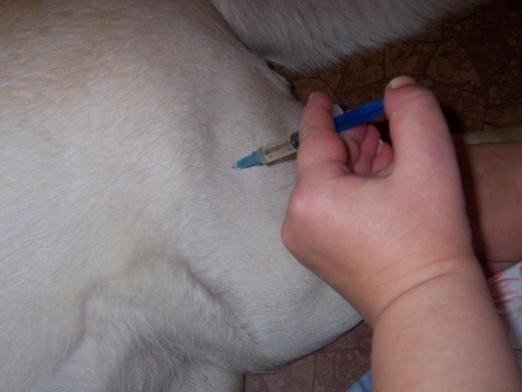 Як зробити укол собаці?