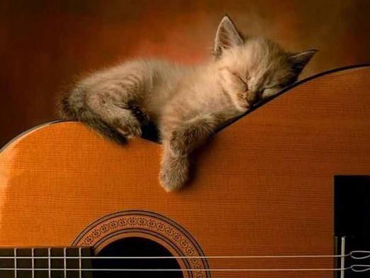 Як сплять кішки?
