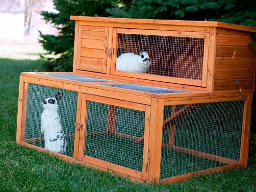 Як доглядати за кроликами?