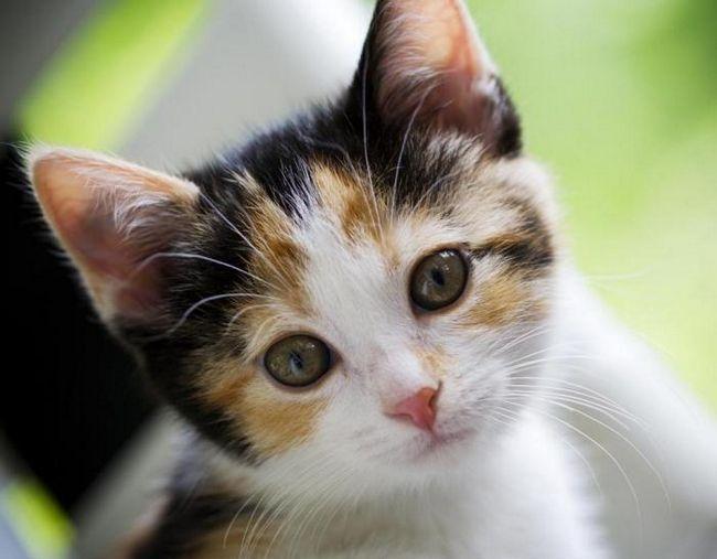 ім`я для кота