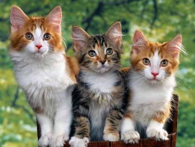 незвичайні клички для котів