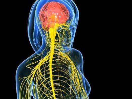 Як виглядає нерв?