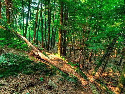 Як вижити в лісі?