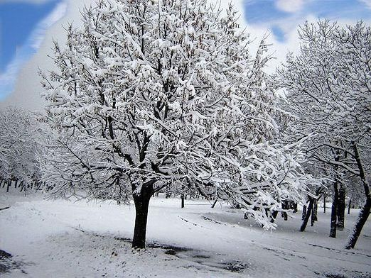 Як зимують дерева?
