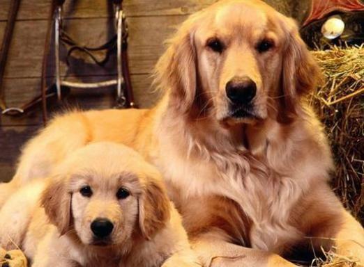 Яка собака мені підходить?