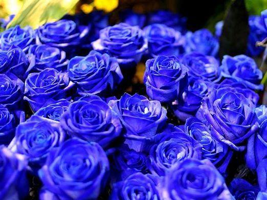 Які бувають троянди?