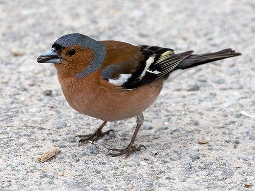 Які птахи перелітні?